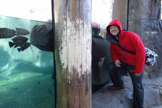 Up close with a hippo