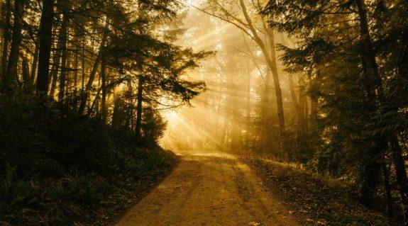 path to true success