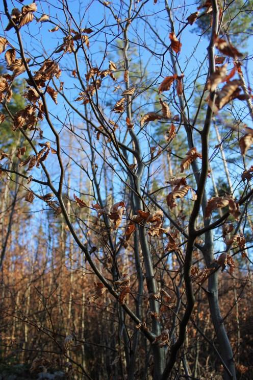 woodland wroclaw free holiday in poland