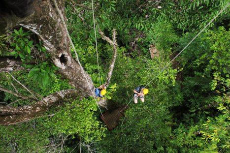 Tree climbing at Hacienda Baru
