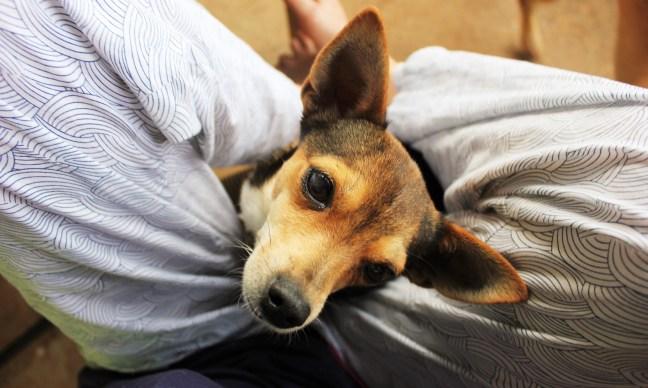 House Sitter - Reggie the dog