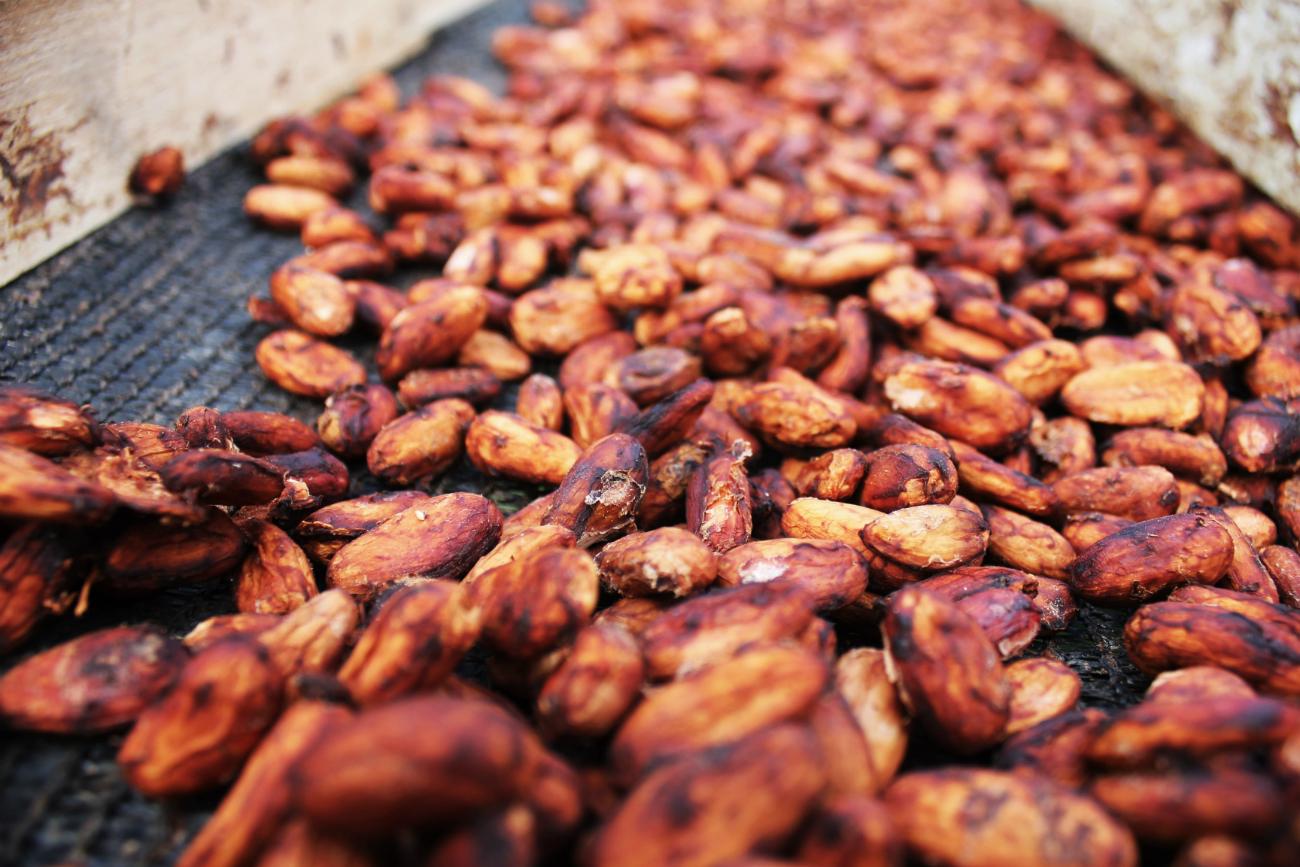 Exploring A Costa Rican Spice Farm