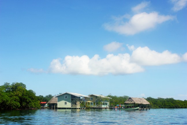 Bad dolphin boat tour Bocas del Toro - Charlie on Travel