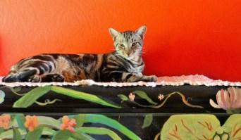 Ocho the cat house sitting omtepe island nicaragua - Charlie on Travel