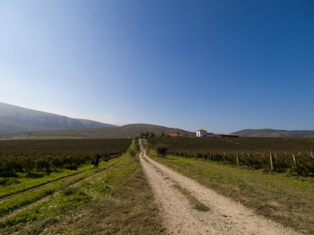 Winery in Macedonia by Bojan Rantasa