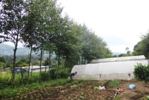Harvesting vegetables in the community gardens