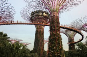 Singapore supertrees in Gardens by the Bay