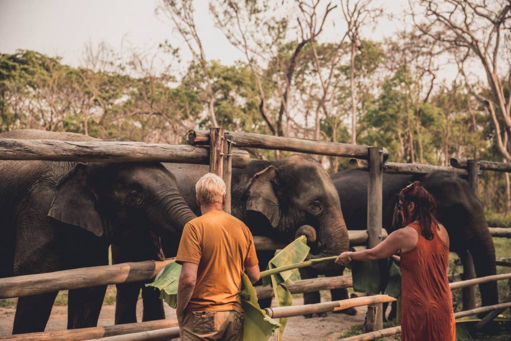 Why influencers need to stop promoting unethical elephant sanctuaries.