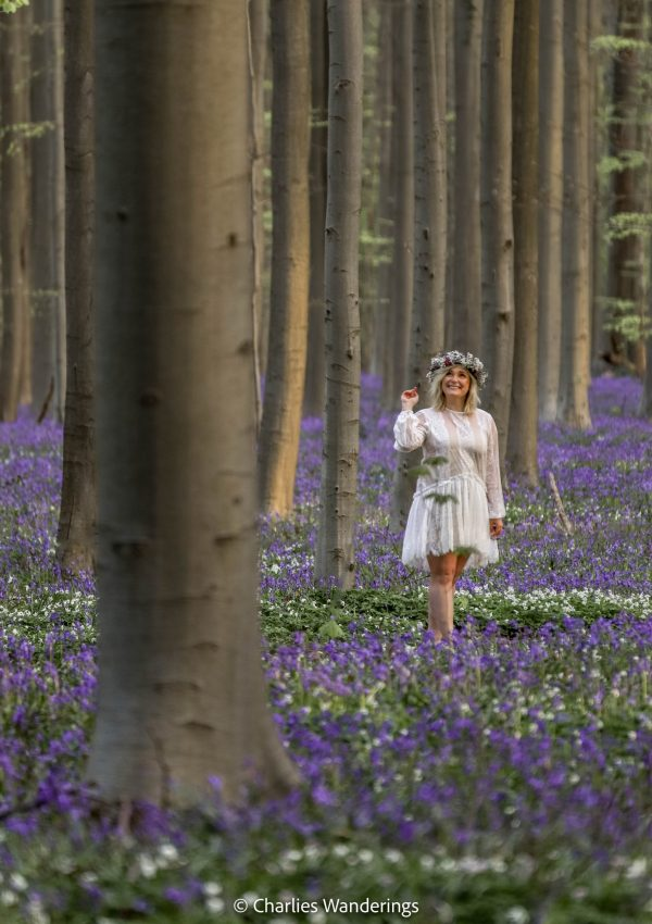 Hallerbos Forest – A Travel Guide To The Blue Forest In Belgium