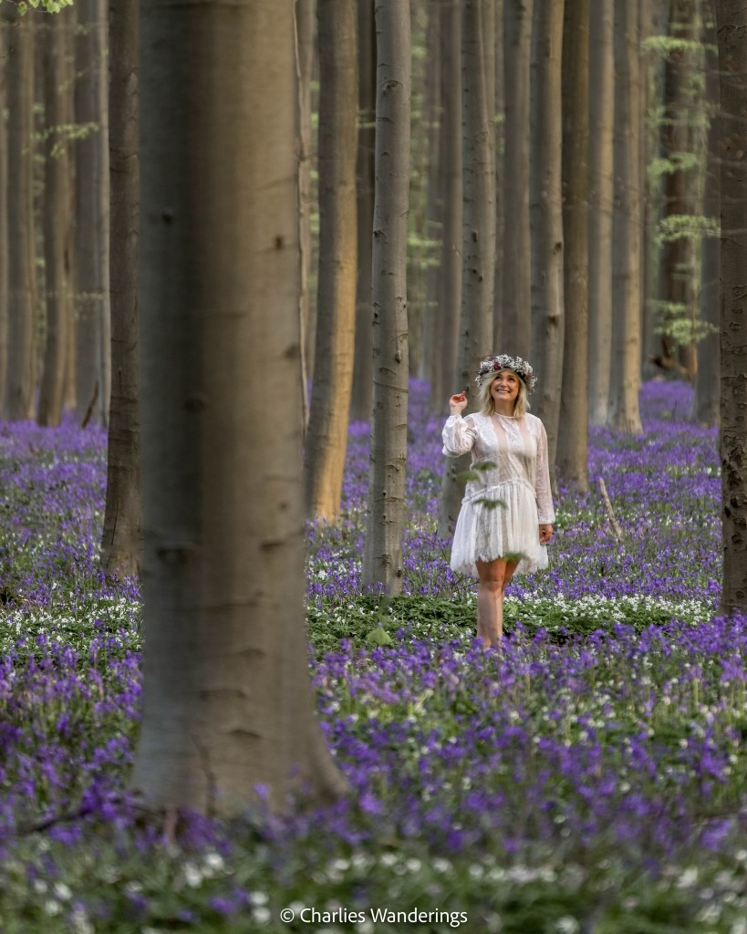 Hallerbos Forest - A Travel Guide To The Blue Forest In Belgium