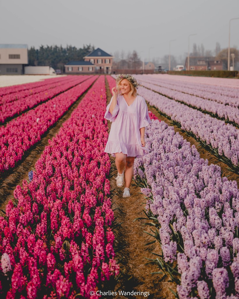 The Most Beautiful Flower Fields in The Netherlands
