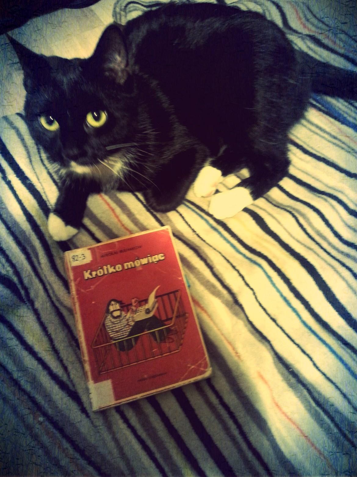 """Kiki krótko mówi - """"To nie ten Bułhakow!"""", Źródło: jedna kotka, która w sprawach zasadniczych milczy."""