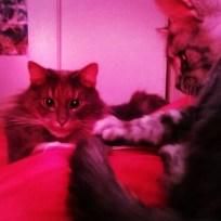 Conseil de chats !