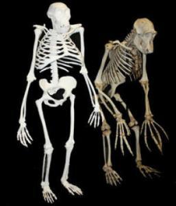 2 million year old woman