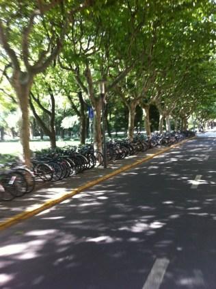Tree-Lined Avenue