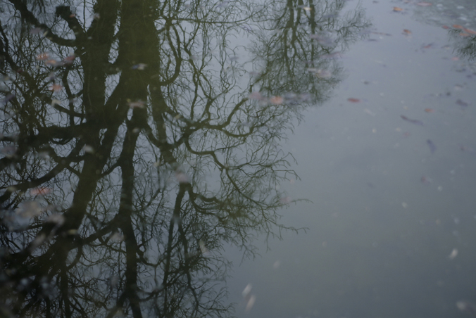 arbre_reflet2