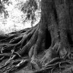 Putting Down Sabbath Roots