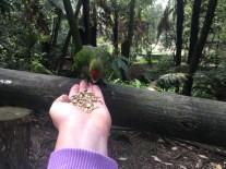 We got to feed like birds!