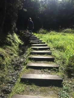 800 steps up