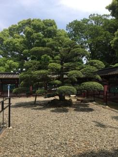 Tree in Ueno Park