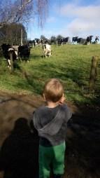 Farm-walks galore