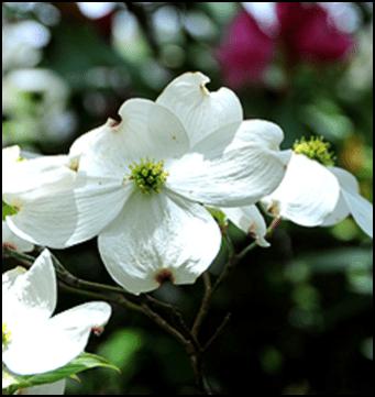 FD_flower
