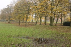Showing a more natural look at Autumn - the puddle & mud. I particularly like it because of the reflection in the puddle. Perhaps could be a metaphor for seeing negatives about oneself in the mirror (only shows barren branches/trunks, not leaves which are argueably prettier)