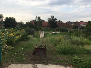 HIghcombe allotment
