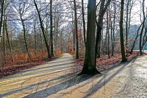 Bamberg Hain 066_wz, Autor: Charlotte Moser