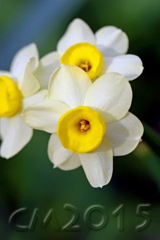 Frühling, Autor: Charlotte Moser
