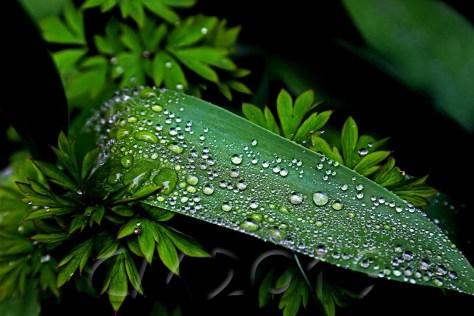 Frühlingsregen I, Autor: Charlotte Moser