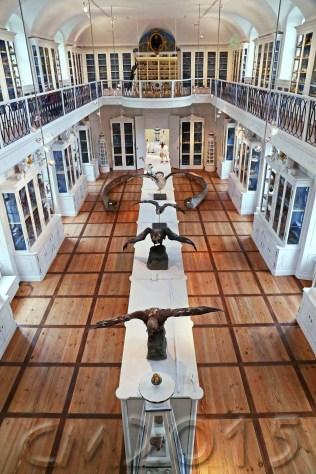 Vogelsaal, Autor: Charlotte Moser