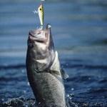 【ステマちゃうよ!】魚群探知機アプリめっちゃ欲しい!釣りしてぇーー