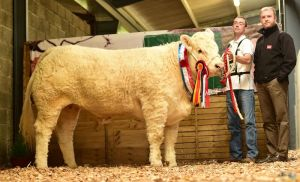 heifer-champion-grangwood-jolly-holly-with-gerry-o-keefe-and-ifj-sponsor