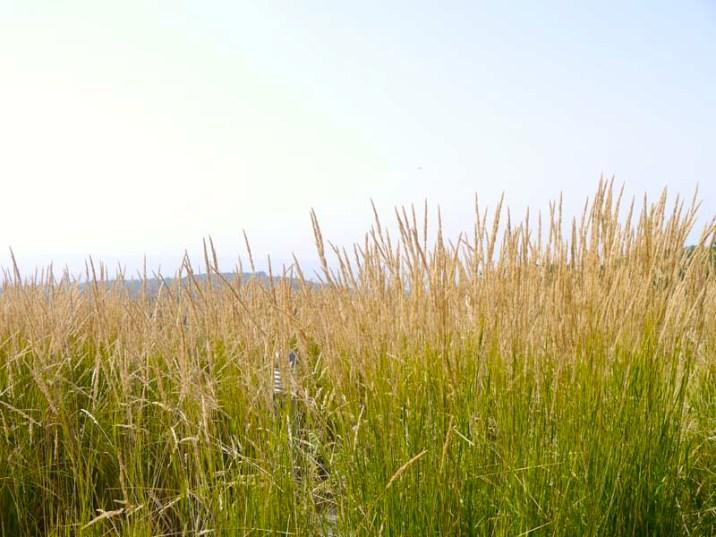 Ma journée de rêve à Terre d'Avoine avec A-Derma (1) - Charonbelli's blog beauté