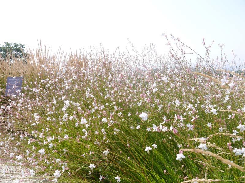Ma journée de rêve à Terre d'Avoine avec A-Derma (3) - Charonbelli's blog beauté