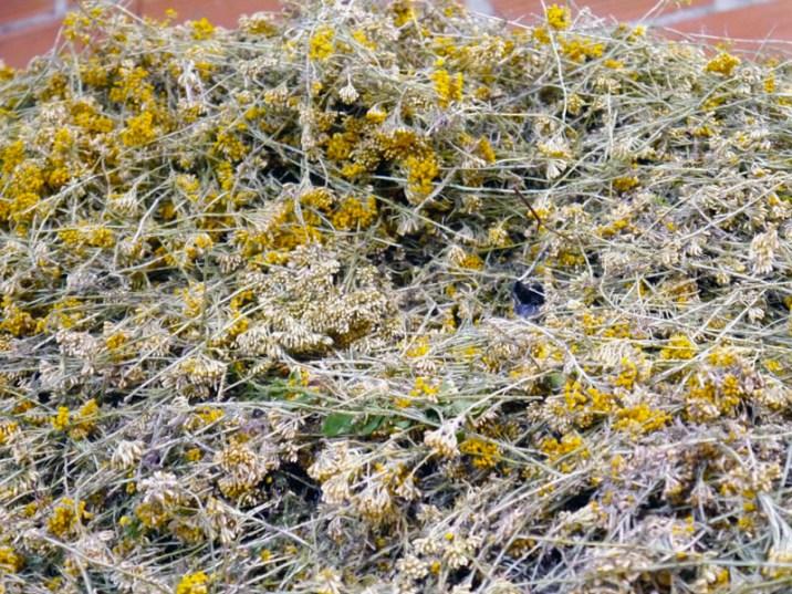 Helichryse-Naturactive(2)-Charonbellis