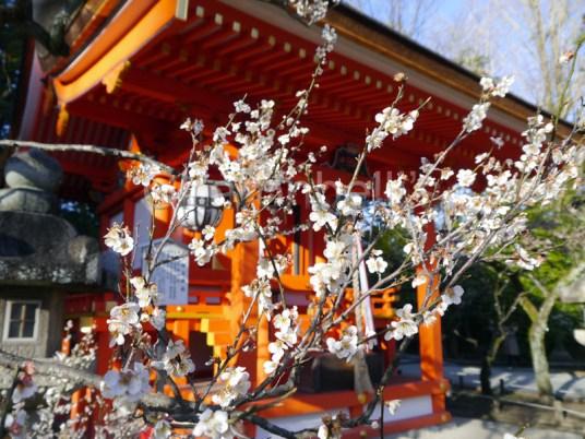 Japon-Visiter-Kyoto-en-5-Jours(4)-Charonbellis