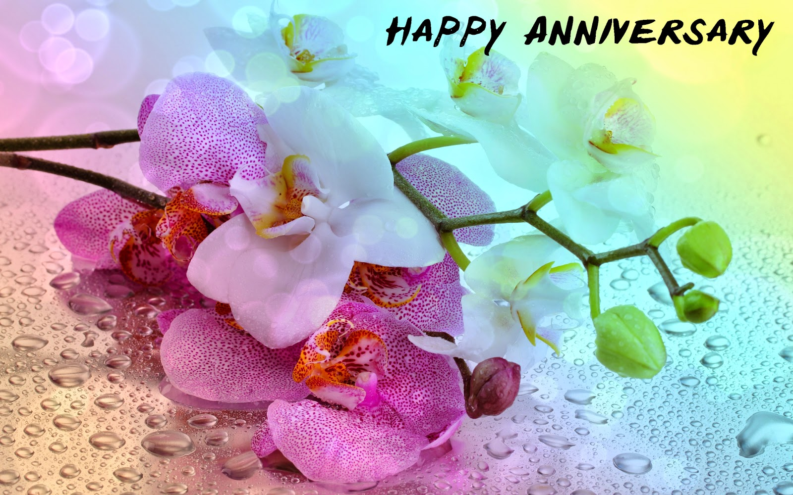 20 Best Happy Anniversary Images Pictures And Photos