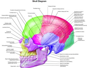 Anatomy | Chart Diagram  Charts, Diagrams, Graphs Best