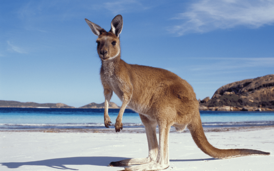 10 Destinations to Visit in Australia on a private jet!