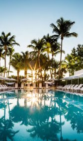 florida-palmTrees-Pool