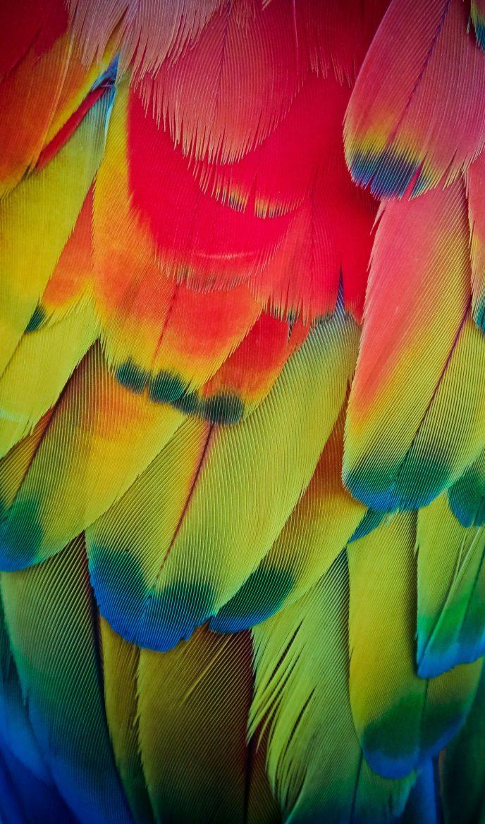 Aruba Parrot Feathers