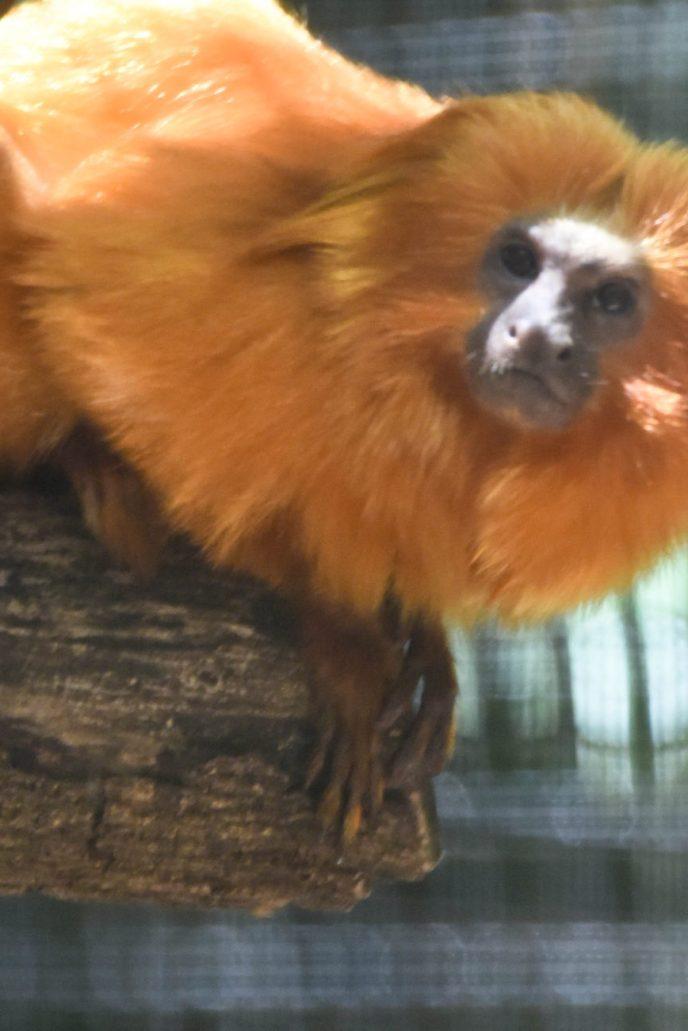 Palm Beach Zoo Monkey