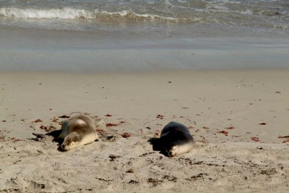 Seals sunning themselves