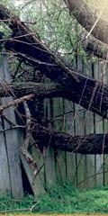Tree-Fence web photo