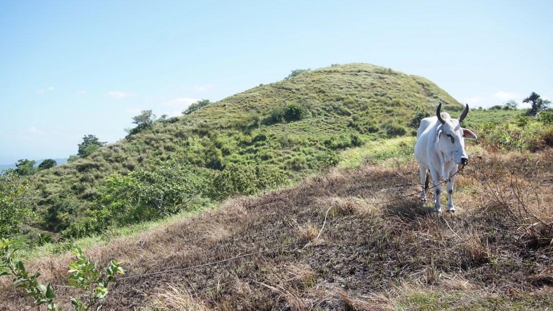 Mt. Gulugod Baboy - Mabini, Batangas (Climb Guide)