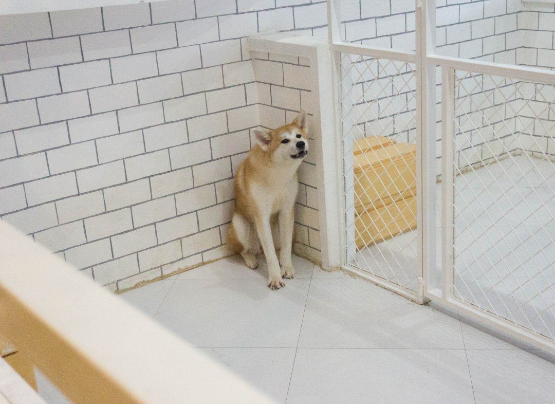 Bengal Brew and Wolf & Bear - Cat and Dog Cafe