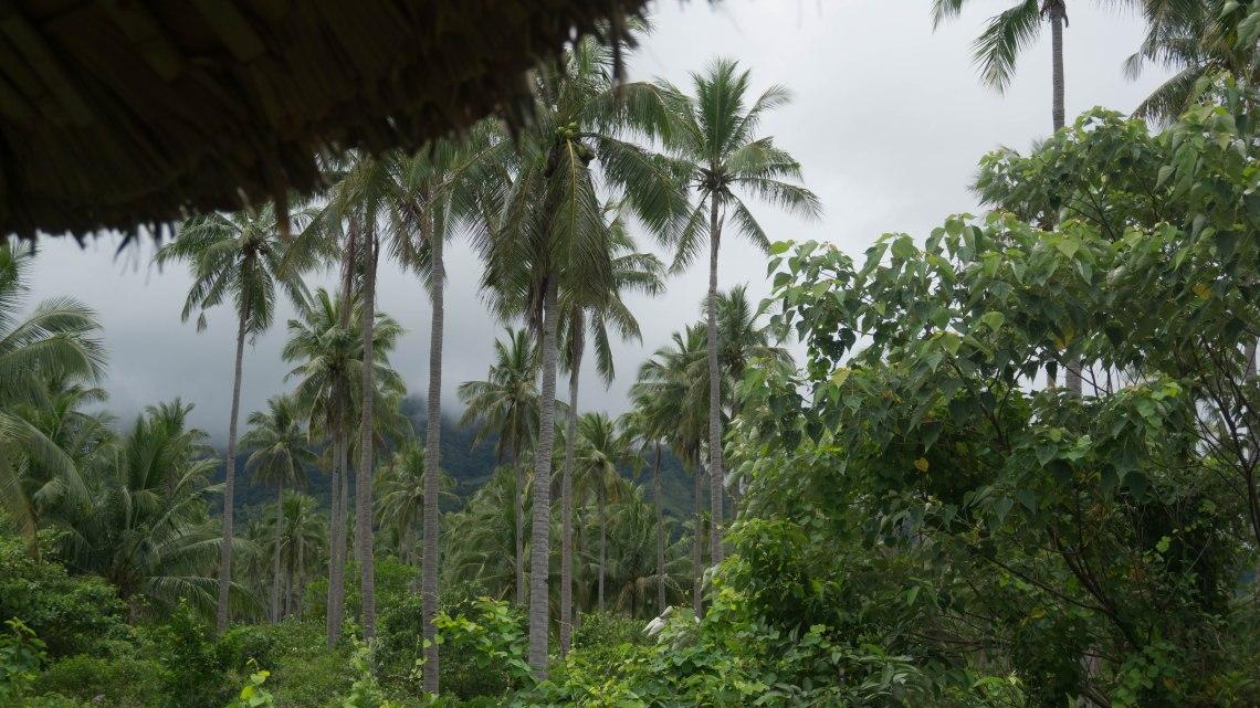 Canaan Hill Farms - Biliran Province