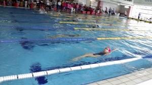 イルカ杯に行って来ました。 ゴールへ向かう背泳ぎの選手/どこまでもアマチュア